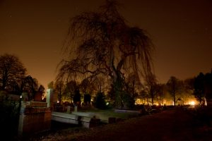 night-tree-spooky-sullen
